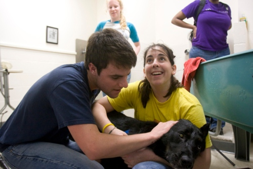 "(Jackson, Mississippi - March 25, 2009) - From left, Alternative Spring Break volunteers Danny Pellerin '12 and Abby Koff '12 give a bath to ""bear,"" a dog who lives inside The Humane Society in Gulfport, Mississippi. Staff Photo: Kris Snibbe/Harvard News Office"